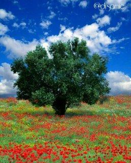 مثل درخت باش